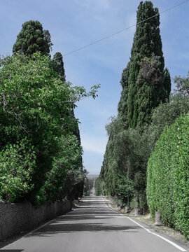 Characteristic Long Road of the Medieval Village of Bolgheri in Tuscany surrounded by Cypresses - Italy