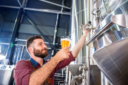 Young brewer wearing a leather apron is testing beer at a modern brewery