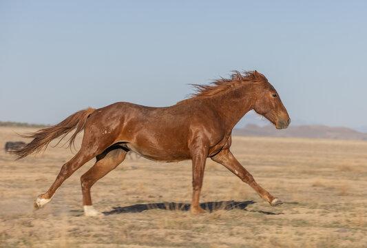 Wild Horse in the Utah Desert