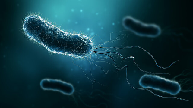Group of bacteria such as Escherichia coli, Helicobacter pylori or salmonella 3D rendering illustration. Microbiology, medical, bacteriology, biology, science, medicine, infection concepts.