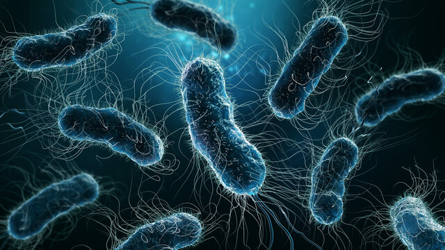 Colony of bacteria close-up 3D rendering illustration on blue background. Microbiology, medical, biology, science, medicine, infection, disease concepts.