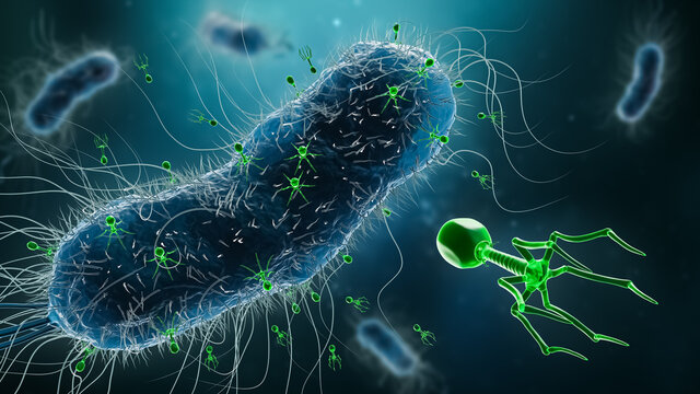 Group of phages or bacteriophages infecting bacteria 3D rendering illustration. Microbiology, science, medicine, biology, medical and healthcare concepts.