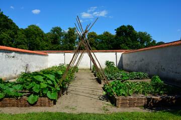 ogród warzywny, warzywnik, vegetable garden