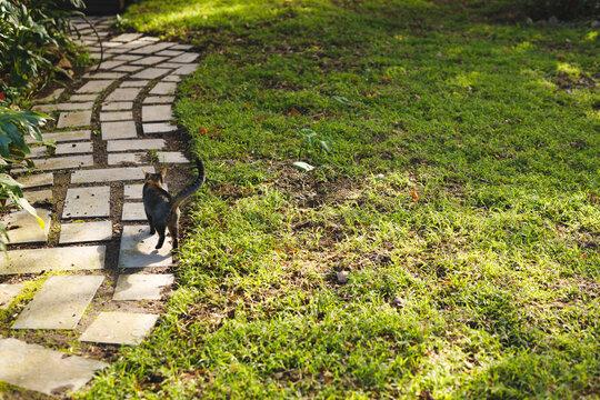Close up of pet cat walking in sunny garden