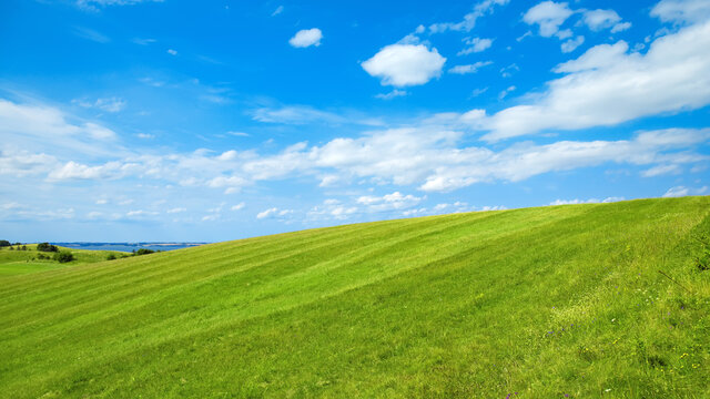 green meadow with a blue sky