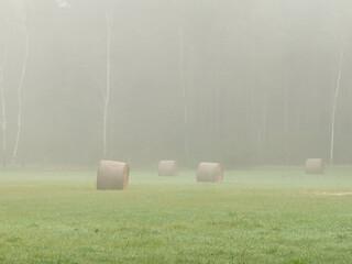Łąka skryta w porannej mgle.