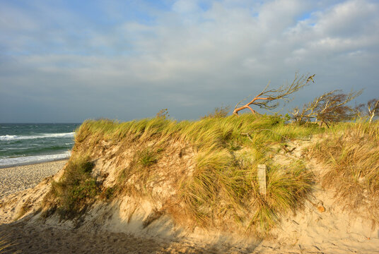 View to the baltic sea and sand dunes at the natural reserve Fischland Darss