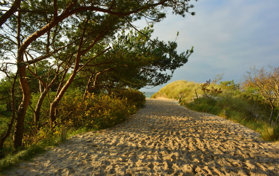 Beautiful way to the baltic sea at the natural reservat Fischland Darss