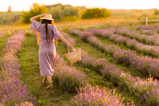 Back view portrait of stylish brunette female in a straw hat walking outdoors at the lavender field. Brunette woman with picnic basket meeting sunset, enjoying fresh air, beautiful nature concept