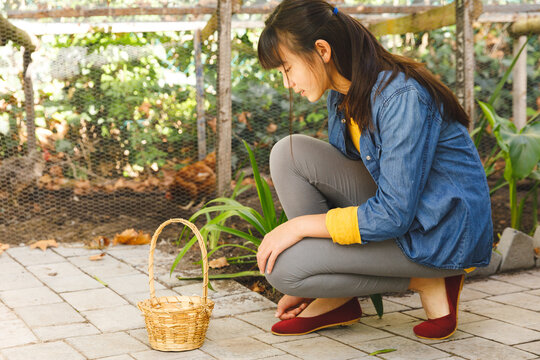 Asian girl with basket smiling and collecting eggs from hen house in garden