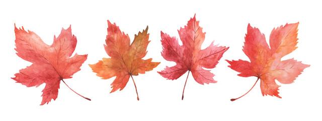 Fototapeta Set of watercolor autumn maple leaves obraz