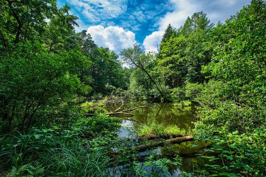 """Wildromantische Flusslandschaft an der """"Schlaube"""" zwischen den Seen """"Schulzenwasser"""" und """"Langesee"""""""