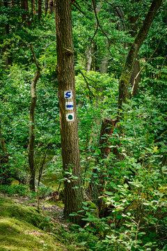 """Baum mit Wegzeichen am Wanderweg durch den brandenburgischen Naturpark Schlaubetal (Das """"S"""" steht für """"Schlaubetal-Wanderweg"""")"""