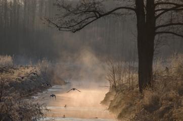 Obraz Mgła unosząca się znad wody, zimą o wschodzie słońca - fototapety do salonu