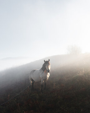 Horse in foggy meadow in mountains valley. Landscape photography