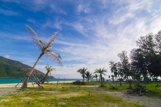 Coconute palm tree on sea beach with green grass against blue sky