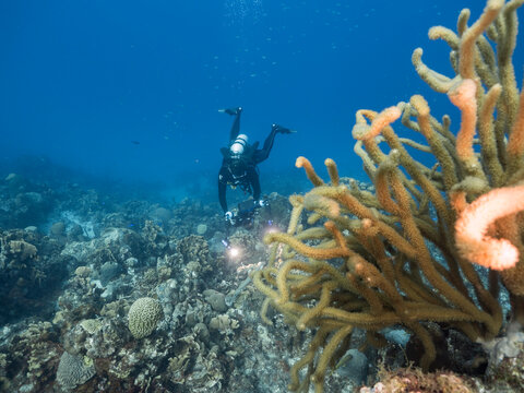 Professional diver / underwater cinematographer filming in coral reef of Caribbean Sea around Curacao