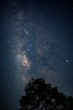 vertical milky way in the starry night sky with moon behind silhouette big tree