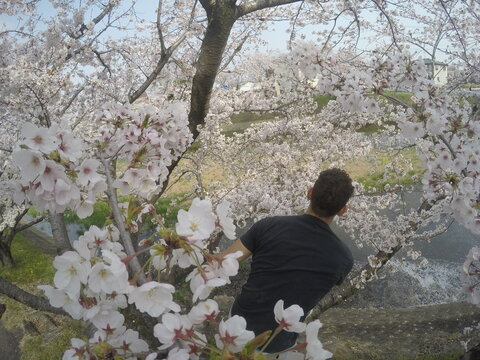 Back view of man in black shirt standing near cherry blossom tree