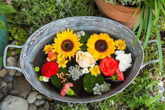 Verschiedene Blüten von Sommerblumen liegen im Wasser einer Wanne im Garten