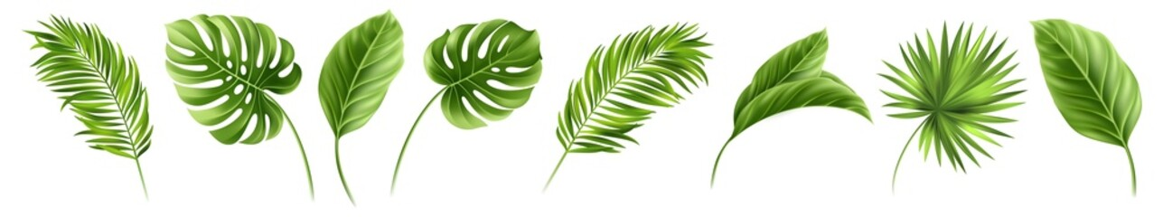 Summer, spring leaves set. Green flat icon. vector, Isolated on white. Tropical Leaves, leaf, plant, illustration, beauty, botany, decoration, design, nature, vector, forest, summer, tree.