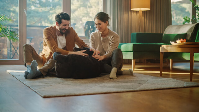 At Home: Happy Couple Play with Their Dog, Gorgeous Brown Labrador Retriever. Boyfriend and Girlfriend Tease, Pet and Scratch Super Happy Doggy, Have Fun in the Living Room