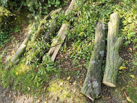 Baumpflege - zerkleinern von Schnittholz zum Abtransport