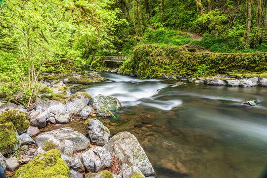Cedar Creek flowing through lush forest.