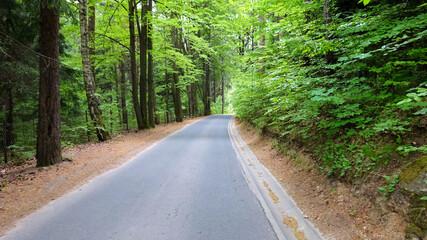 Fototapeta Droga w lesie  obraz
