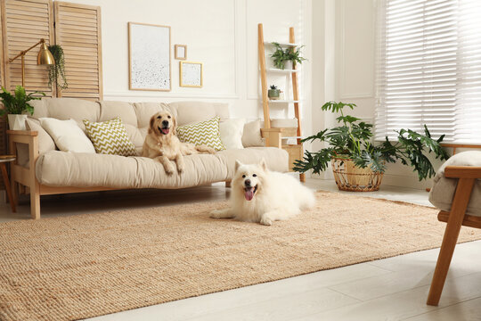 Adorable dogs resting in modern living room