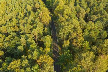 Asfaltowa droga w sosnowym lesie. Widok z drona.