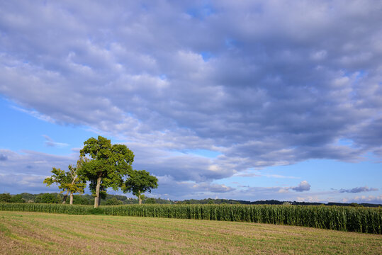 In autumn, a few deciduous trees stand next to a corn field in Bavaria against a cloudy sky