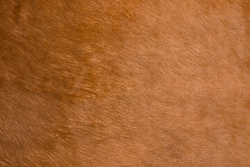 Natural brown fur texture. Animal fur close-up as background. Abstract fur pattern. Soft surface texture.