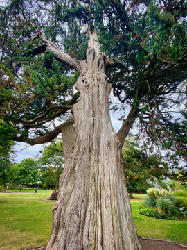 Tree in Manor Gardens, Exmouth