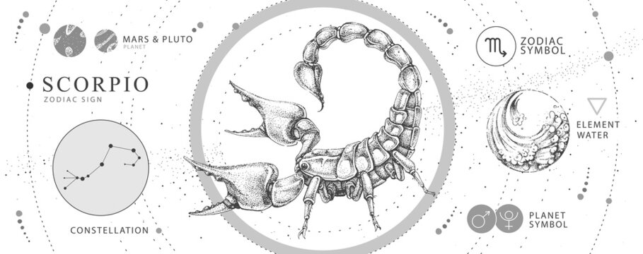 Modern magic witchcraft card with astrology Scorpio zodiac sign. Realistic hand drawing scorpion illustration. Zodiac characteristic