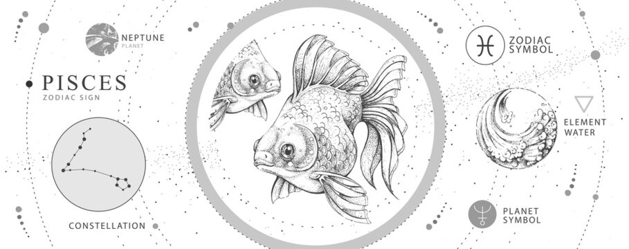 Modern magic witchcraft card with astrology Pisces zodiac sign. Realistic hand drawing koi fish illustration. Zodiac characteristic