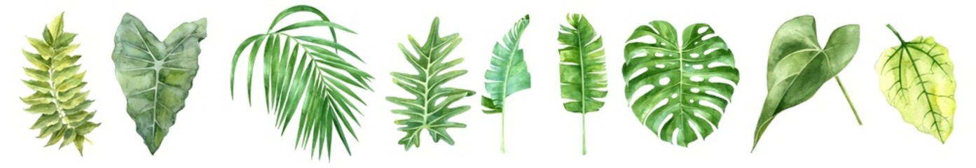 Tropical leaves collection. Vector isolated elements on the white background. set tropical leaves. tropical, leaf, nature, jungle, palm, paradise, botanical, exotic, collection, set, vintage.
