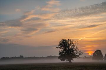 Age oaks on a meadow during a beautiful sunrise