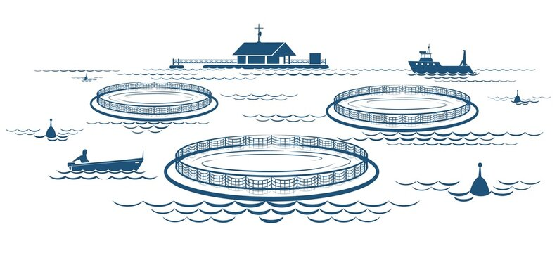 Growing fish industry