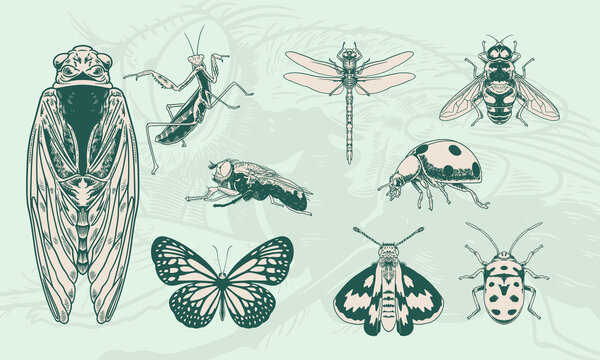 Set of hand drawn of vintage insects illustration.