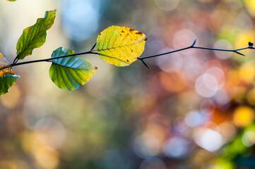 kolorowe li艣cie na drzewach. Jesie艅