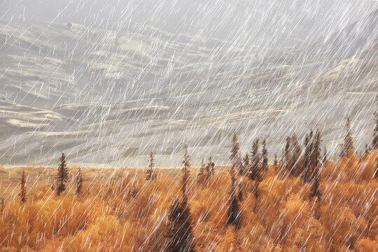 autumn landscape nature rain drops weather wet outdoor landscape view autumn weather