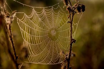 pajęczyna w lesie, na łące