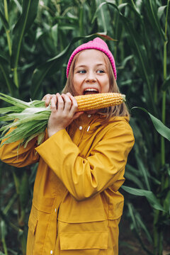 Funny little girl dressed in a yellow raincoat and a hot pink cap spoils and bites corn in a cornfield