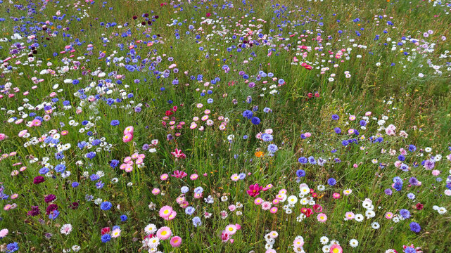 summer meadow with colorful flowers