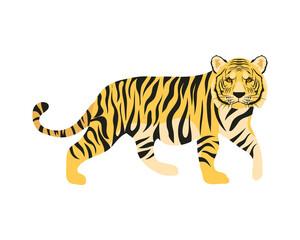 Obraz bengal tiger feline - fototapety do salonu