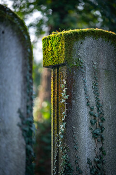 Moss and ivy covered old stone grave.