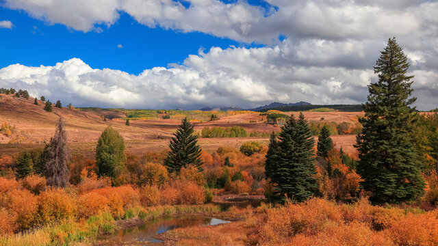 Panoramic view of conifer trees in Colorado surrounded by Fall foliage with cloudy sky during autumn time