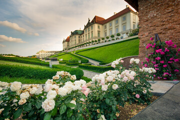 Fototapeta Kwitnące róże w ogrodzie królewskim obraz