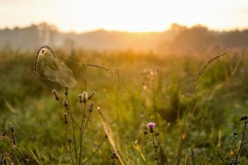 Fototapeta Wschód słońca na łące obraz